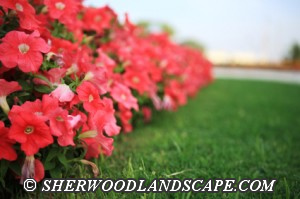 Annual Flower Beds